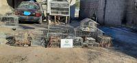 Se desarticuló una banda que robaba ganado y aves silvestres en Traslasierra
