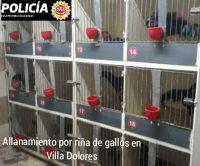 Villa Dolores: 10 detenidos en una riña gallos,entre ellos un menor