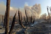 En lo que va del año, los incendios forestales afectaron más de 84 mil hectáreas en toda la provincia