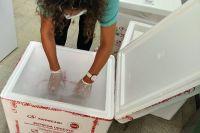 El Hospital San Luis y de Villa de Merlo recibieron más dosis de vacunas contra el Coronavirus