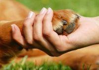 Charla virtual sobre los derechos de los animales
