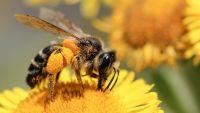 Campaña de concientización para el cuidado de las abejas