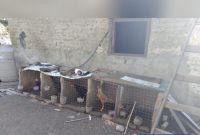 Secuestran gallos de riña, plantas de cannabis y aves silvestres en Traslasierra